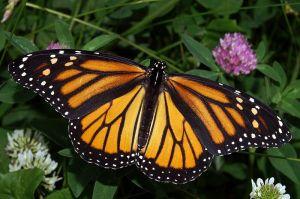 Look for butterflies