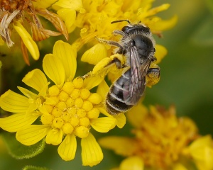 Hope for pollinators