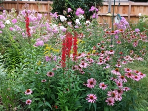 Add plants bees love to your yard!