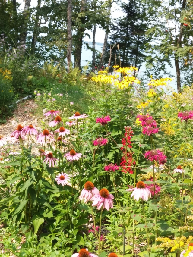 Hummingbirds and bees love this garden on Lake Superior(background lake)