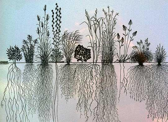 prairie-grasses