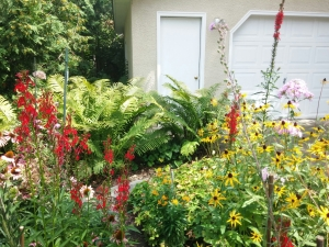 Cardinal flowers are happy this year with lots of rain!