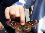 Celebrating migrating butterflies