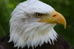bird-62696_640
