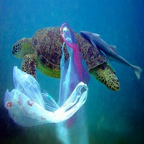 turtle-plastic by ecomena.org