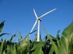 wind-turbine-cornfield